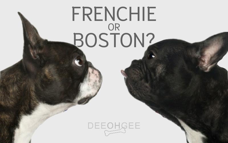 DeeOhGee Frenchie or Boston Blog Post