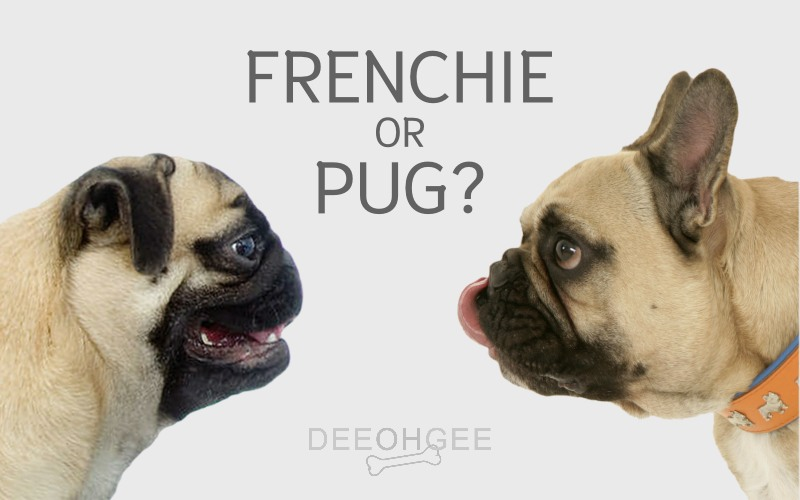 DeeOhGee Frenchie or Pug Blog Post