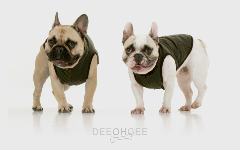 DeeOhGee Frenchie Blog Post